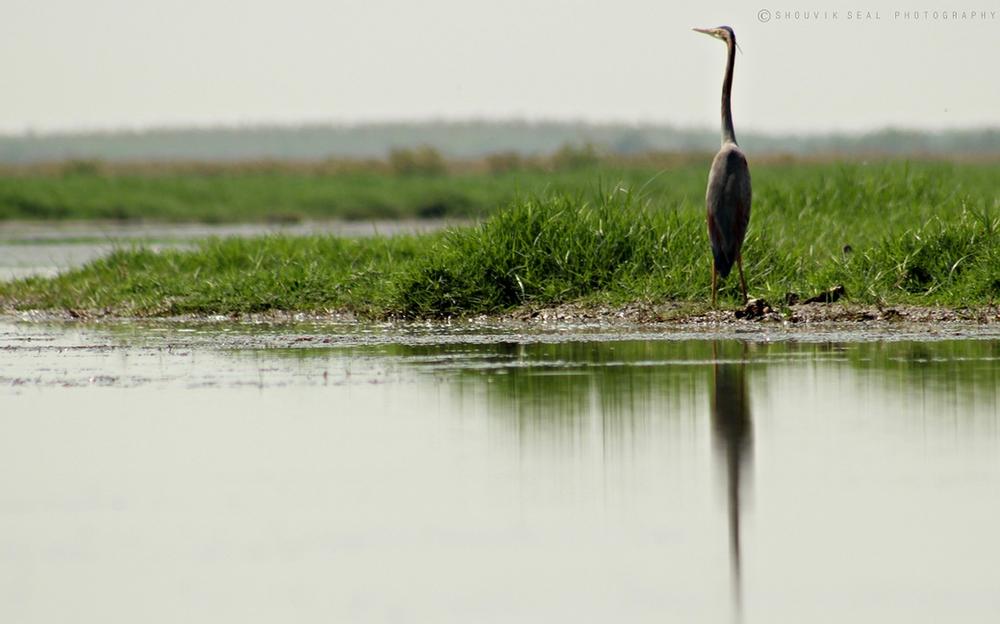 NGO Wild Odisha's assiduous effort conserved the vulnerable avifauna into avian's paradise