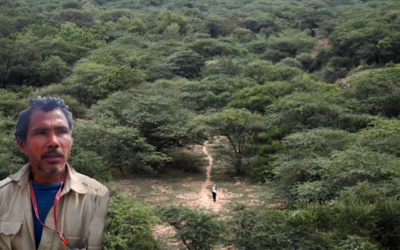 Jadav Molai Payeng the jungle man of India and a living lesson in the conservation of forest